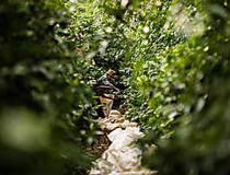 Agrônomo ajuda fazendas a melhorar produtividade - Nespresso