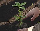 Técnicas diferentes que fizeram bonito na revitalização da horta do Pão dos Pobres