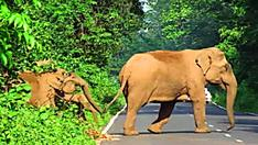 [Pics] Man Was Riding His Bicycle But Then A Huge Elephant Arrives From The Bush And Threatens His Peace