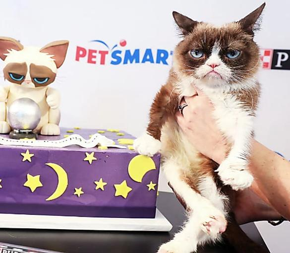 "Grumpy Cat Celebrates Birthday at ""Save a Fortune"" Event"